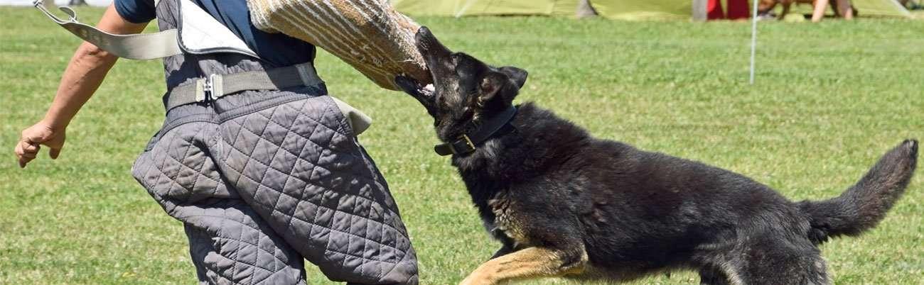 Africanus Dogs In The Uk