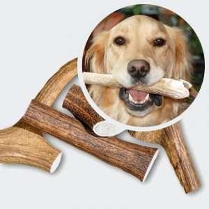 antler chews